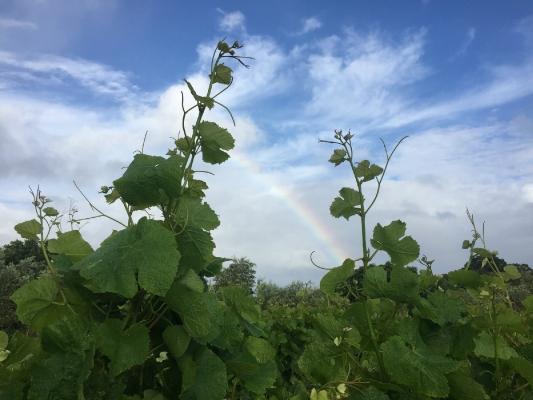 Streamblock Vineyard